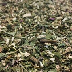 Equinacea (Echinacea purpurea)